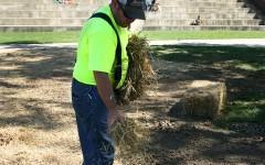 Feature photo: Hay, make itrain