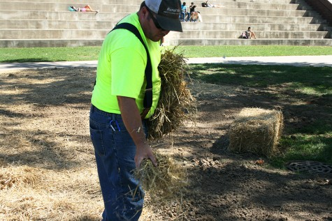Jason Schafer, a grounds worker at Eastern, pours hay over new topsoil Wednesday in the library quad. Schafer had been working since eight that morning.