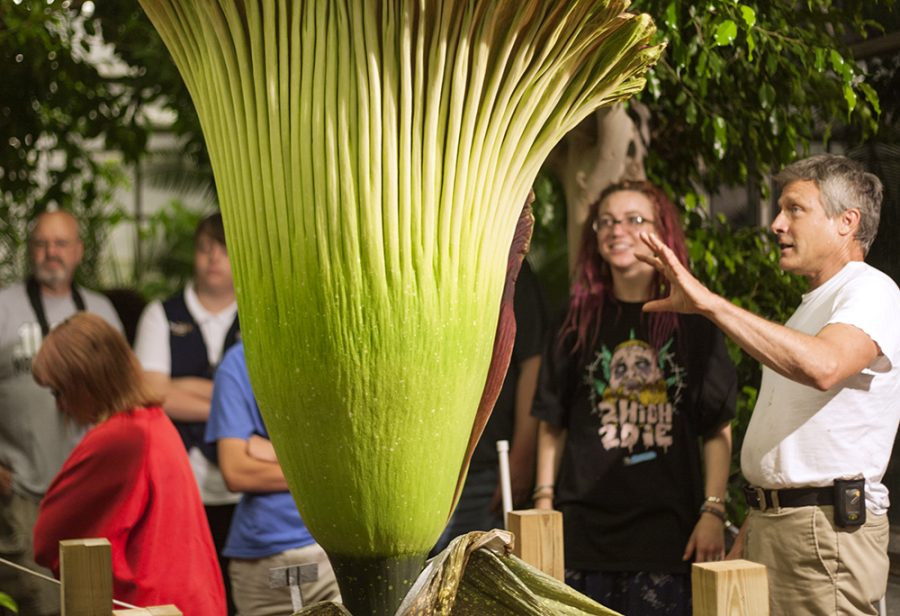 """Steven Malehorn talks to visitors about the corpse flower's blooming process Wednesday in the Thut Greenhouse. Malehorn explained that the female flowers were """"out partying"""" while the male flowers were in for the night. The male flowers, however, will come out to """"watch the game"""" as the process comes to a close the next day, Malehorn said."""