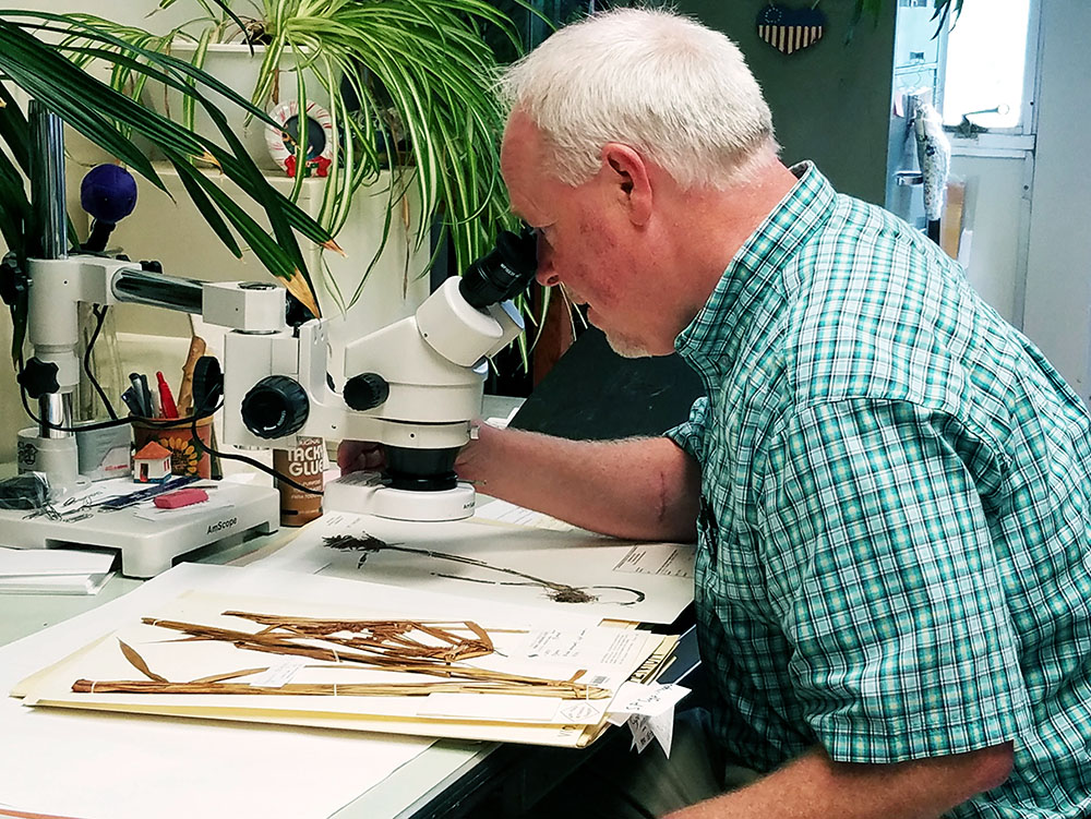 Angelica Cataldo | The Daily Eastern News Gordon Tucker, a biology professor, examines samples he had on file in his office. Indian botanists named a plant species after Tucker because of his contribution to their work.