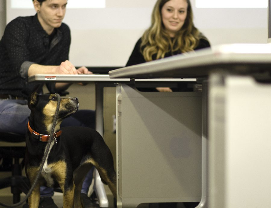 Bike and Hike advocacy director Brendan Lynch's dog Teo watches on as students present rebranding ideas to help with the store's identity and profile within the community Wednesday in the Doudna Fine Arts Center.