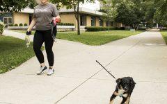 FEATURE PHOTO: Dogs need exercisetoo