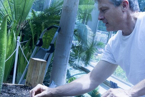 Steven Malehorn, the greenhouse manager at the H. F. Thut Greenhouse, tends to the Titan Arum plant, as he describes the bracts (leaves) on the plant. The corpse flower is set to bloom around the end of the month.