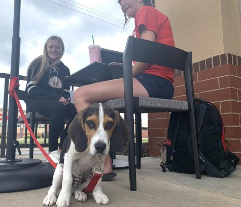 Harvey, a 14-week-old Beagle puppy, sits with his owner Hannah McCarty (right) and her friend Brittany Phelps (center back) outside of Starbucks Thursday afternoon.