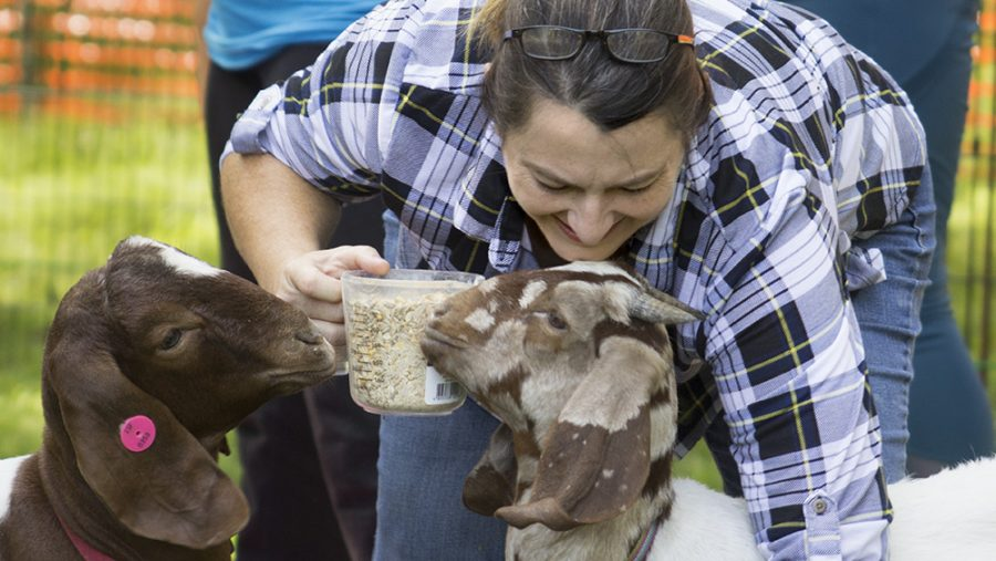 Heidi Hawkins scoops oats into cups for participants in goat yoga to spread on their mats.