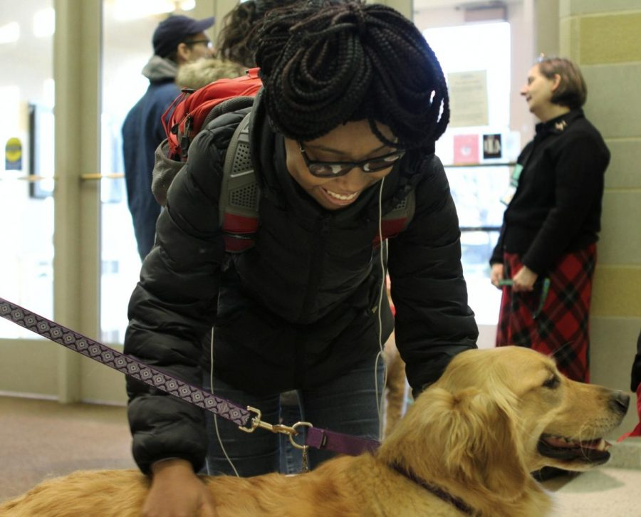 Erykah Walker, a freshman biology pre-medication major, pets one of the therapy dogs in Booth Library on Tuesday evening.