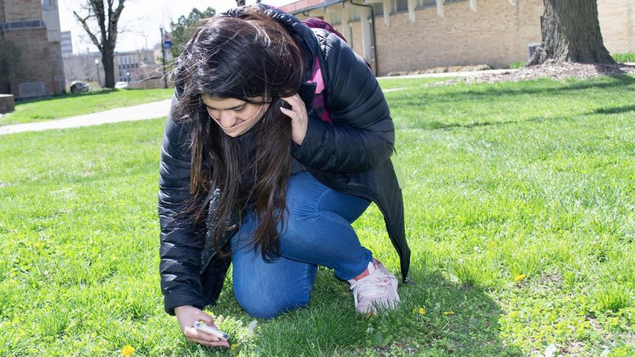 Namrata Saini, international graduate student majoring in kinesiology and exercise science stops between class to take photos of dandelions. Saini mentions that she is looking forward to taking a photo of the